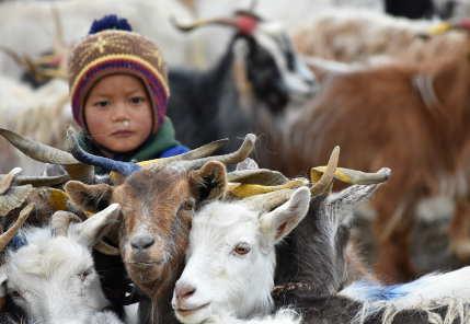 reportage Ladakh e Himachal Pradesh: nomadi dei CHANG-PA 2