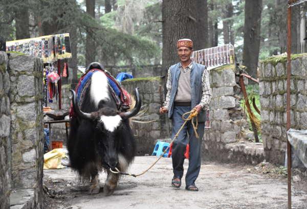 reportage Ladakh e Himachal Pradesh: tempio di Hadimba