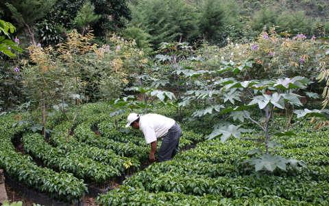 Qualità e Toro Caffè produrre con attenzione artigianale: farm