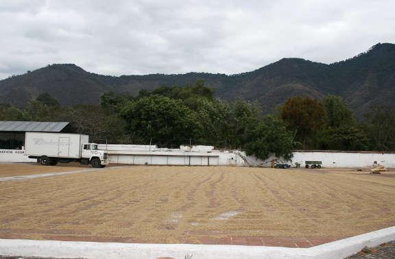Toro Caffè farm in Guatemala