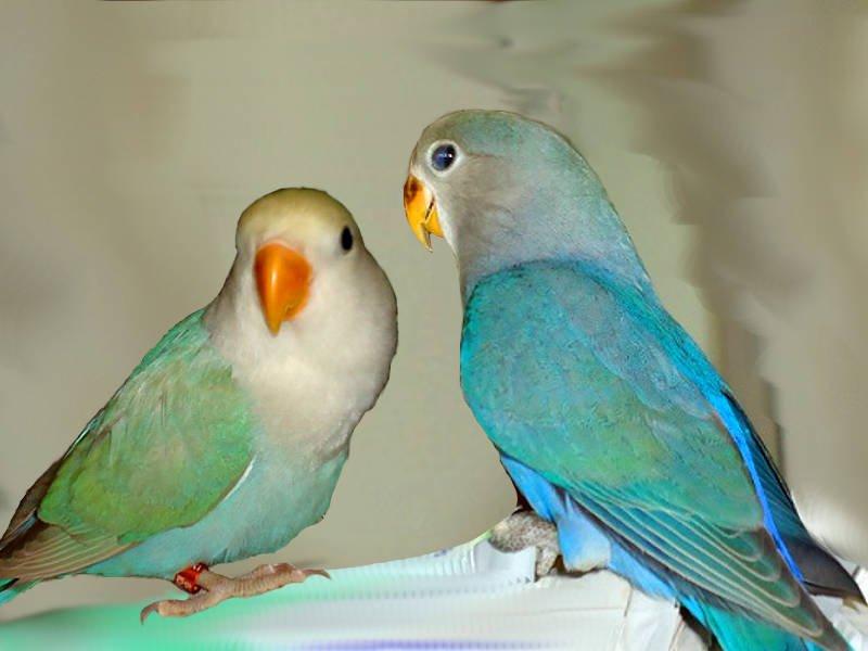 Anche i pappagalli fanno Pet therapy
