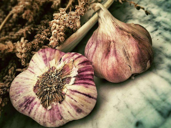 L'aglio, che vince malanni, spiriti e paure