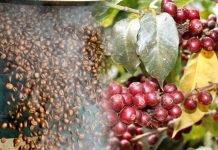 Toro Caffè produrre con attenzione artigianale: La qualità nel caffè