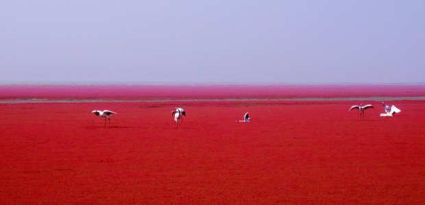 Uccelli sulla spiaggia rossa di Panjin in Cina