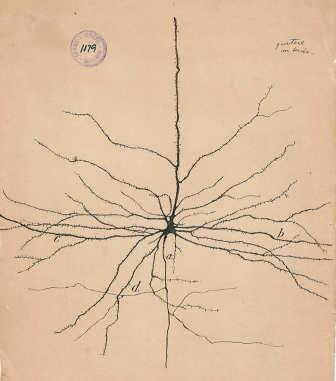 neurone Santiago Ramón y Cajal disegno del 1904