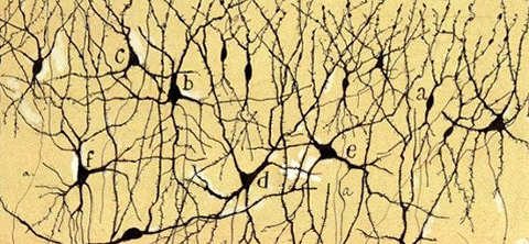 Disegno di Santiago Ramón y Cajal