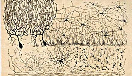 Disegno di Santiago Ramón y Cajal 9