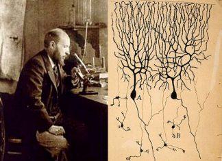 Santiago Ramón y Cajal lo scienziato che disegnò il cervello umano