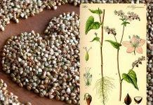 Il grano saraceno: rimedio di salute e di bellezza