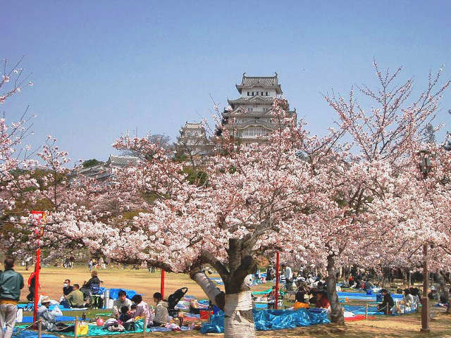 luoghi da visitare in Primavera, Hanami 1
