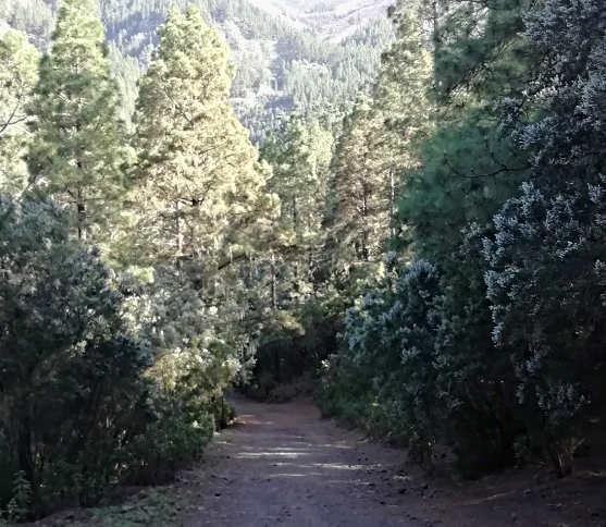 Sentiero che parte dall'Area ricreativa La Caldera Tenerife