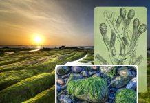 Le alghe: i segreti delle piante di mare