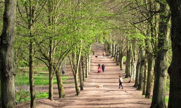 Hampstead Heath 1 a