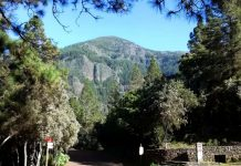 La Caldera, un viaggio nei boschi di Tenerife