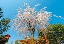 7 luoghi da visitare in Primavera