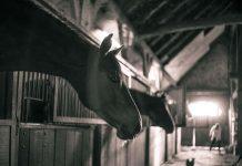 Mangiare carne di cavallo fa davvero bene?