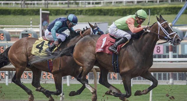 Equini che svolgono attività sportiva: cosa comporta mangiare carne di un cavallo non DPA.