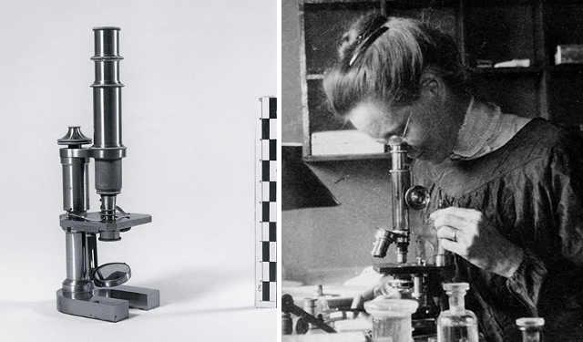 Nettie Stevens al microscopio