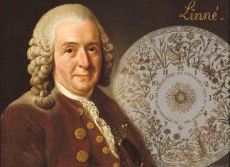 L'orologio floreale di Linneo