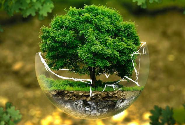 Foto per Piantare un albero