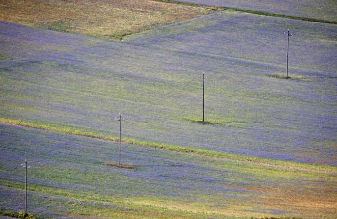 Fioritura di Castelluccio di Norcia foto di Giuseppe Quattrone 8