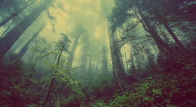 Il bosco, articolo I campi elettromagnetici e il 5G,