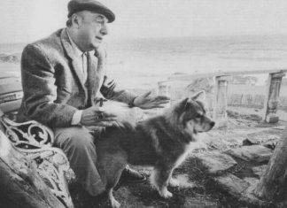 Le poesie sui cani di Neruda e la Ode al gatto