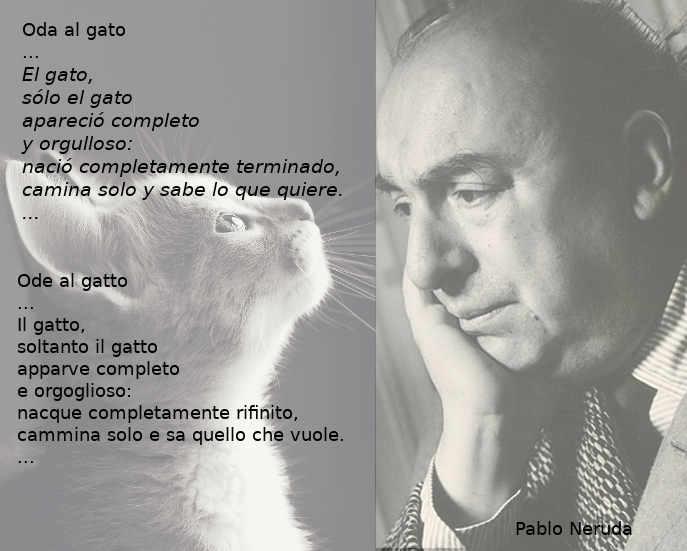 Ode al gatto, Poesia sul gatto di Pablo Neruda