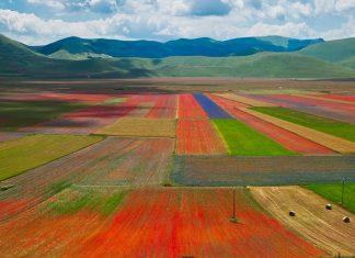 10 bellissime immagini della Fiorita (o Fioritura) di Castelluccio di Norcia