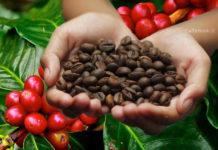Fuga da una tazzina di caffè (I Produttori e il basso costo del caffè)