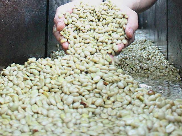 I Piccoli Produttori e il basso costo del caffè