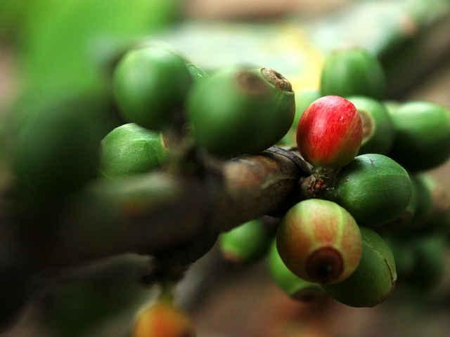 Foto per Il caffè del Brasile