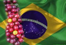 Il Caffè del Brasile 6