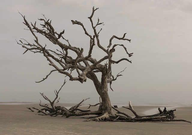 I comportamenti virtuosi nel campo ambientale e il cambio climatico