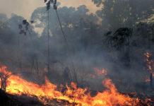 Perché vogliono deforestare l'Amazzonia
