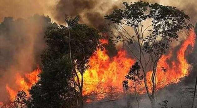 Deforestazione dell'Amazzonia con incendio