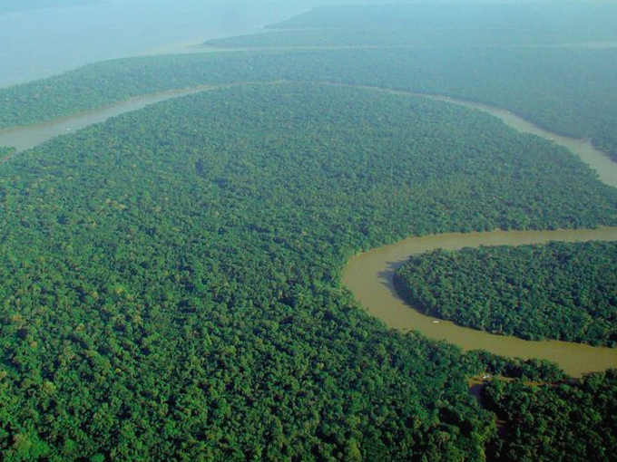 Foto per Perché vogliono deforestare l'Amazzonia