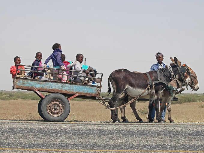 Commercio della pelle di asino in Africa