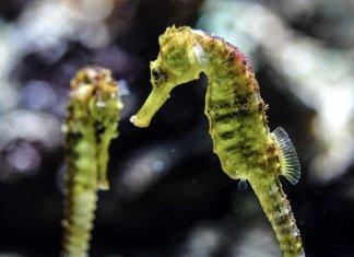 Cavallucci Marini e Cetrioli di Mare: una strage nei mari