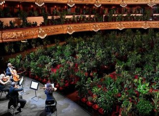 L'insegnamento dimenticato del Covid-19 e l'importante ruolo delle piante