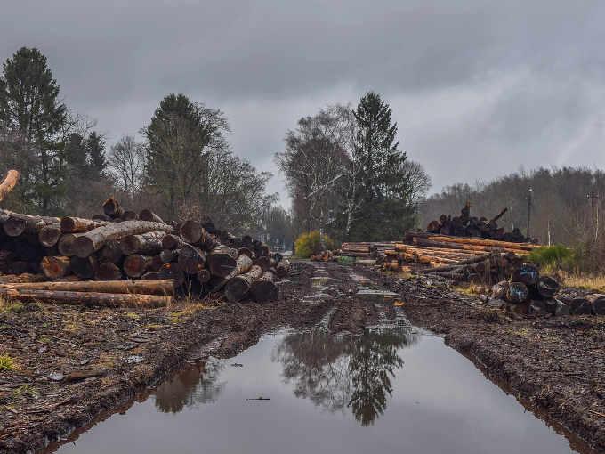 La conservazione degli habitat naturali e il ruolo delle piante: il disboscamento