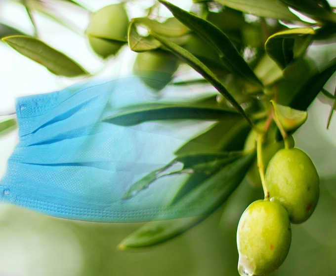 Le celebrazioni Pasquali ai tempi della pandemia e il ramoscello di ulivo