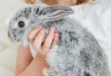 La terapia del coniglio