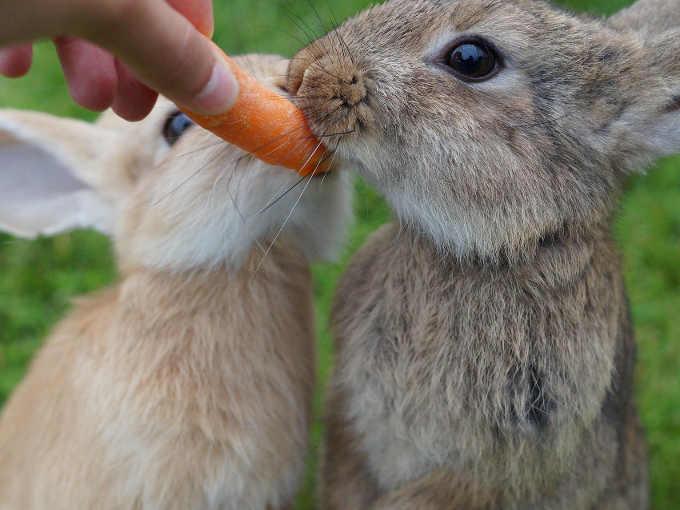 La Pet Therapy dei conigli con gli anziani
